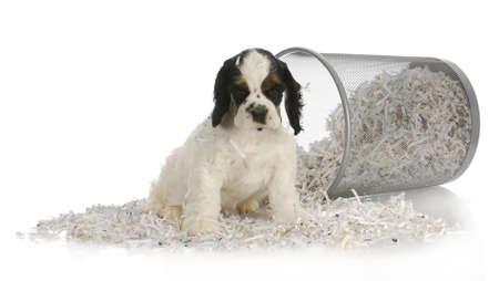 Puppy zitten in gerecycled papier - Amerikaanse cocker spaniel pup - 8 weken oud Stockfoto - 11843548