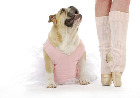 dancing dog - english bulldog in tutu sitting beside ballerina