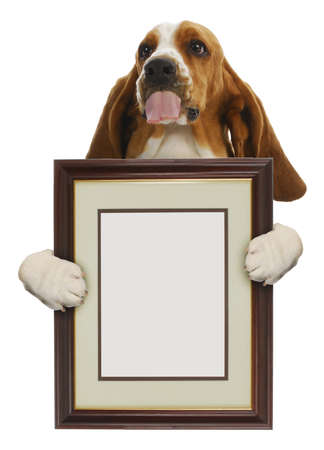 hounds: dog holding blank picture frame isolated on white background Stock Photo