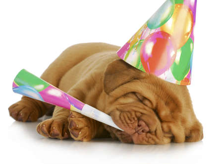 birthday puppy - dogue de bordeaux puppy wearing hat and blowing on horn isolated on white background Foto de archivo