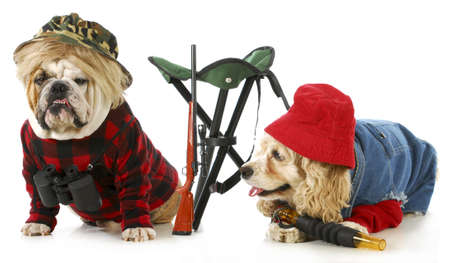 cap hunting dog: hunting dogs - american cocker spaniel and english bulldog dressed up like hunting dogs isolated on white background Stock Photo