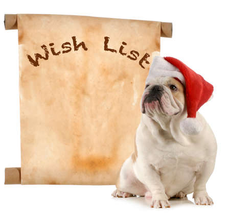 christmas costume: pet christmas wish list - english bulldog santa with a christmas wish list Stock Photo