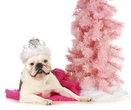 princess dog - english bulldog dressed up like a princess laying beside a pink tree photo