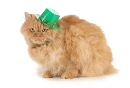 red clover: St Patricks Day cat looking at viewer isolated on white background