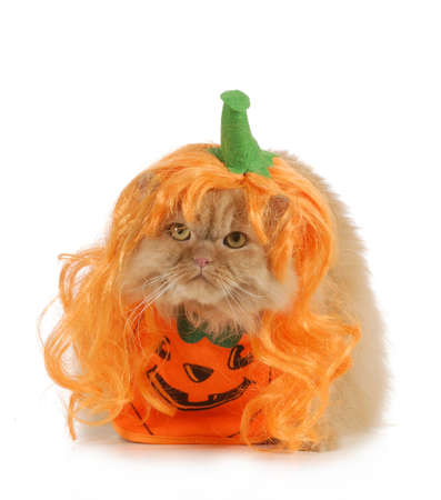 halloween cat dressed up like a pumpkin isolated on white background photo