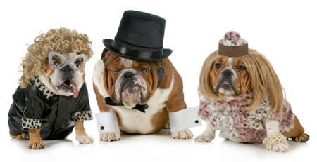 spoiled: males dog with two females all dressed in formal clothing isolated on white background