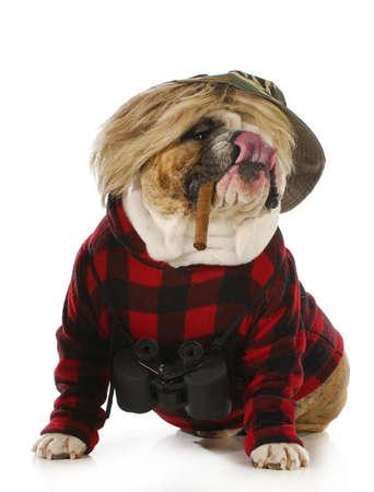 cap hunting dog: hunting dog - english dog smoking cigar and wearing binoculars and hunting sweater isolated on white background