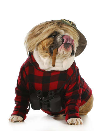 hombre fumando puro: perro de caza - perro de fumar cigarro Inglés y binoculares vistiendo suéter y caza aislados en fondo blanco
