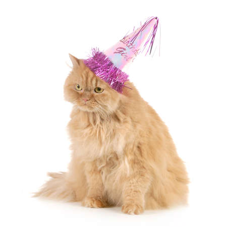 birthday cat wearing party hat isolated on white background photo