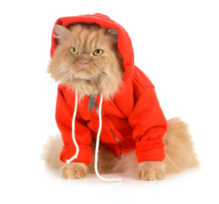 Katze trägt roten Mantel isoliert auf weißem Hintergrund