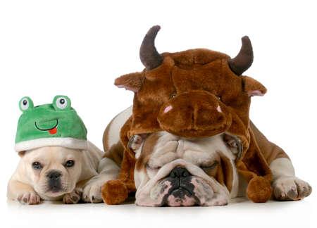 anglický buldok a francouzský buldoček oblečený jako býk a žába izolovaných na bílém pozadí Reklamní fotografie