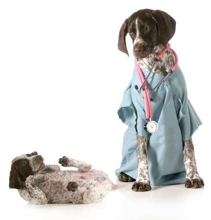 cuidados veterinarios - Braco Alem�n vestido como un veterinario cuidar cachorro enfermo aislado en el fondo blanco photo