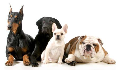 vier verschiedene Rassen von Hunden mit zusammen auf weißem Hintergrund Standard-Bild