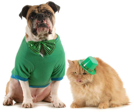 dog days: perro de st patricks día y gatos aislados sobre fondo blanco Foto de archivo