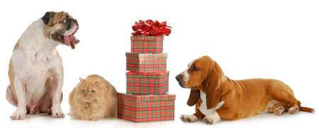 christmas pet - two dogs and a cat sitting beside a stack of presents isolated on white background