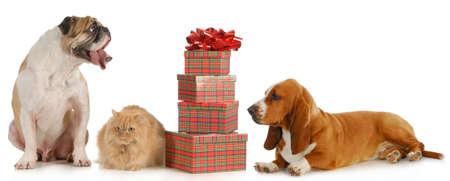 christmas pet - zwei Hunde und eine Katze sitzt neben einem Stapel von Geschenken isoliert auf weißem Hintergrund
