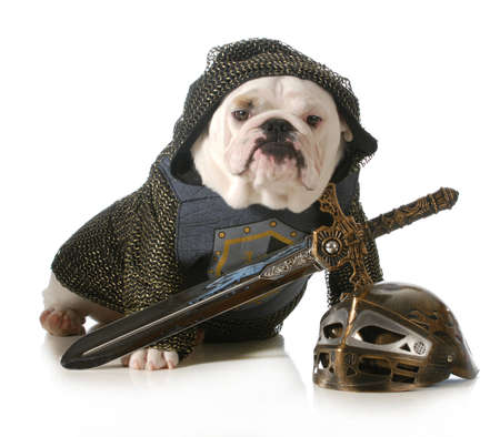 disguises: dog dressed up as a knight isolated on white background - english dog