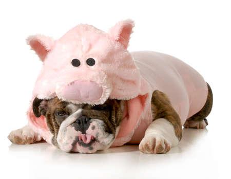 Hund trägt rosa Schwein Kostüm auf weißem Hintergrund - Englisch Dog