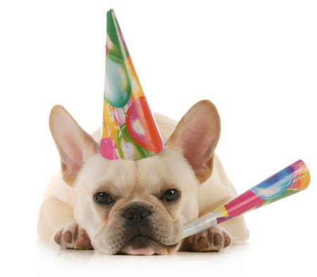 bajo y fornido: perro cumplea�os - perro franc�s gru��n con sombrero birtdhay soplando el cuerno aislado sobre fondo blanco Foto de archivo