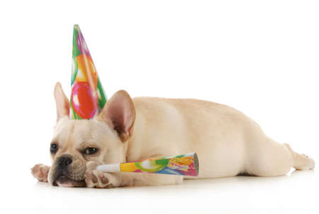 birthday dog - grumpy french dog wearing birtdhay hat blowing on horn isolated on white background Stock Photo