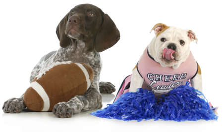 funny love: sports hounds - german shorthair pointer and english dog football fans isolated on white background Stock Photo