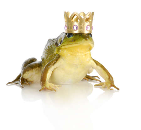 frog prince: handsome prince - bullfrog wearing crown isolated on white background Stock Photo