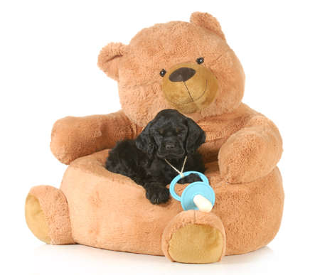 cute puppy laying on a teddy bear bed with a soother around his neck - 8 weeks old photo