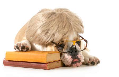 obediencia: obediencia del perro - Inglés bulldog se fijan al lado libros aislados sobre fondo blanco Foto de archivo