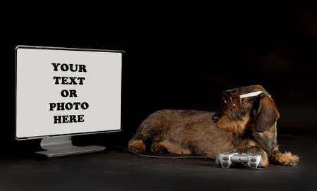 High Tech Dog - Dachshund playing with gaming system looking at monitor isolated on black background Stock Photo