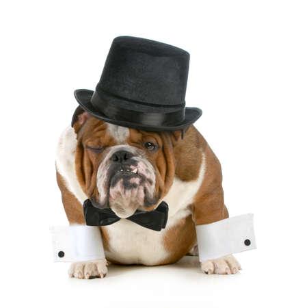 grappige hond - chagrijnig ogende bulldog omhoog gekleed in een tophat en zwarte stropdas op een witte achtergrond
