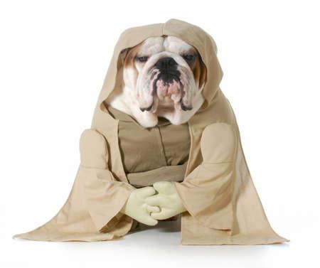 지혜로운 개 - 영어 불독은 Munk은 의상 흰색 배경에 고립 입고