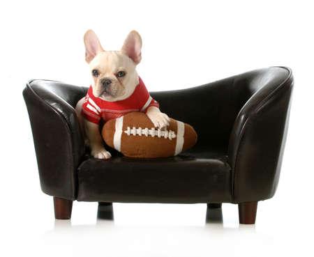 スポーツ犬 - フレンチ ブルドッグぬいぐるみサッカーの白い背景で隔離のソファに座って