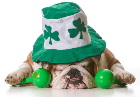 English bulldog wearing St Patrick's Day hat isolated on white  Stok Fotoğraf