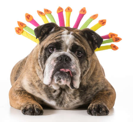 anniversaire chien 2 ans