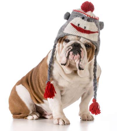 dog wearing winter hat Stock Photo