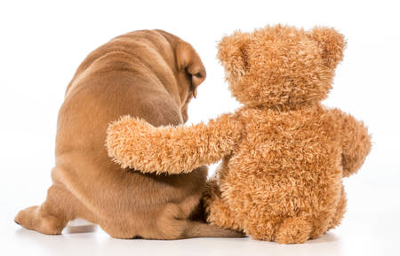 best friends - dog and teddy bear with arm around each other from behind Stock Photo - 27508278