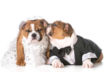 犬の新郎新婦の子犬 写真素材