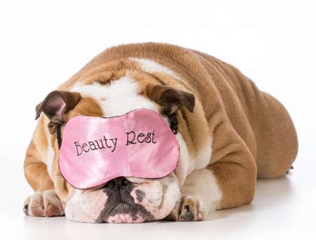 Engels bulldog dragen schoonheid rust slaap masker