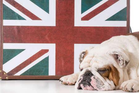 english bulldog sleeping in front of british flag