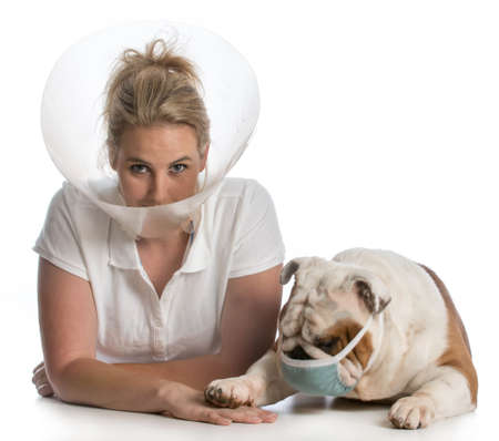 veterinary care - woman wearing elizabethan collar being tended to by english bulldog doctor wearing medical mask on white background