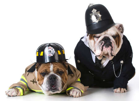 dog dressed up as firefighter and policeman on white background