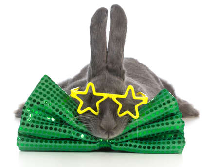 large bunny wearing bowtie and glasses isolated on white background