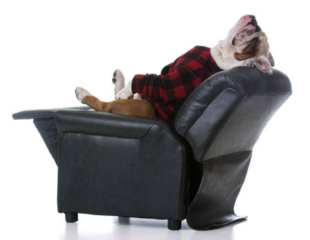 疲れている犬・ ブルドッグ伸ばして戻って白い背景のリクライニングチェアで休憩