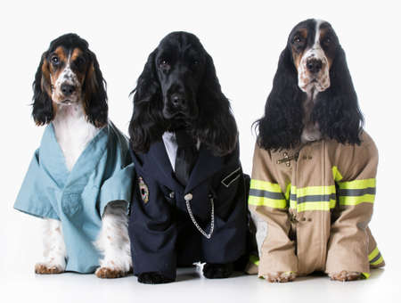 three dogs wearing doctor, policeman, and firefighter costumes on white background - english cocker spaniel