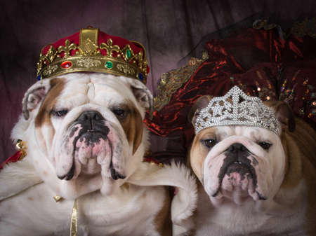 royal couple - two english bulldogs dressed up like a king and queen Stockfoto