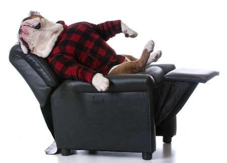 白い背景の上、リクライニングチェアで休んで戻って疲れている犬 - ブルドッグ ストレッチ