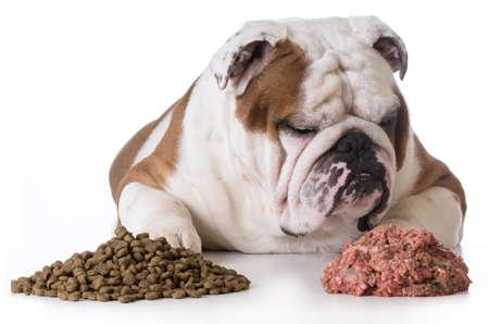 dog choosing raw over kibble - bulldog Banque d'images