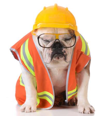 sleeping on the job - bulldog dressed up like construction worker on white background