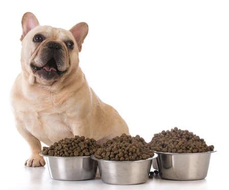 het voeden van de hond - Franse bulldog zat naast enkele kommen van hondenvoer op een witte achtergrond Stockfoto