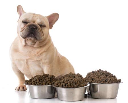 picky eater - french bulldog refusing to eat on white background Archivio Fotografico